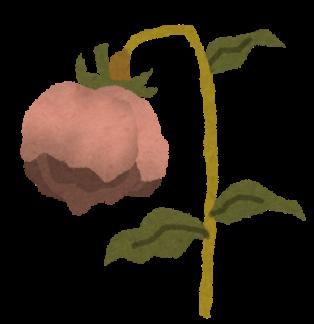 flower_shiore